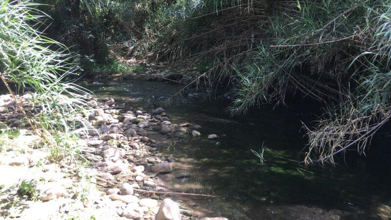 Po Fesr Sicilia 2014-20, ok a 33 progetti di tutela della biodiversità