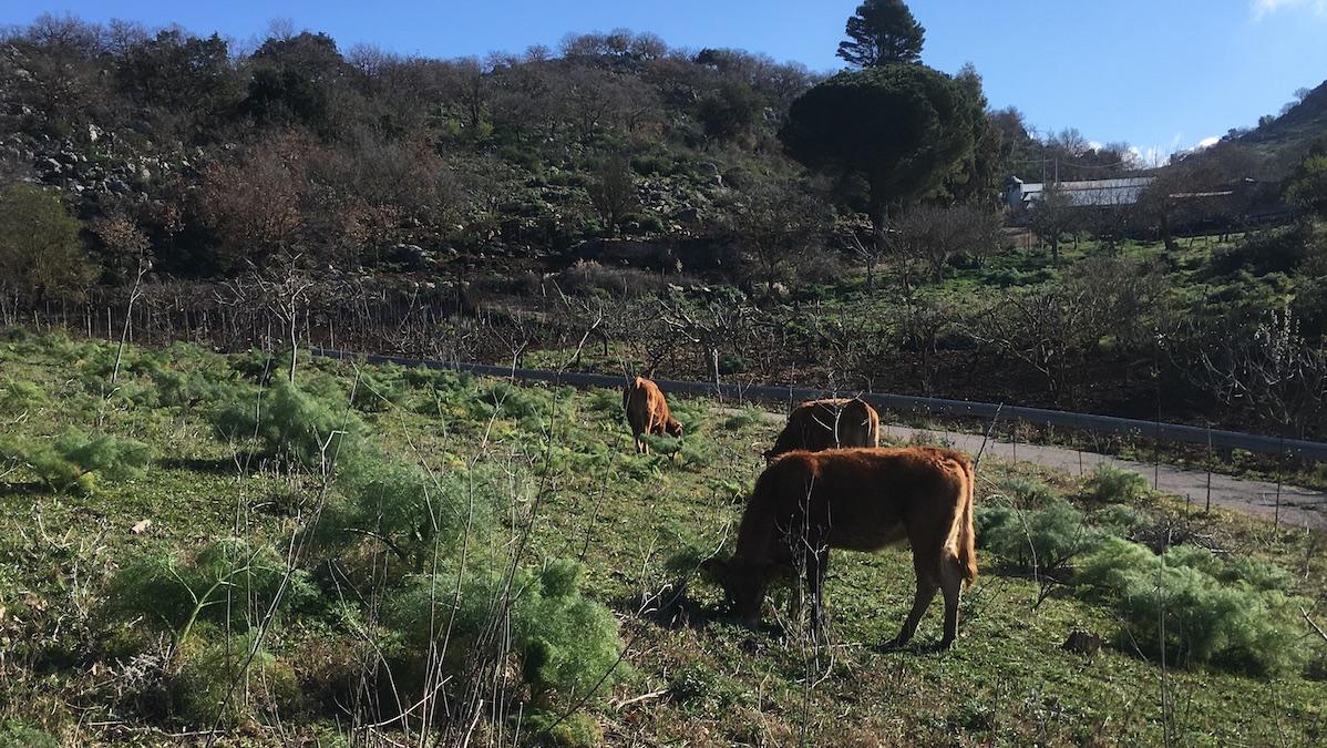 Zootecnia, Attiva Sicilia: favorire modelli estensivi per rispetto ambiente