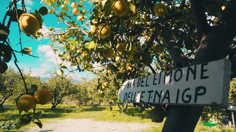 Scent of zagara Limone dell'Etna