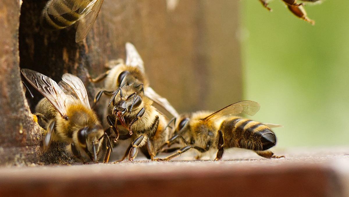 Alla scoperta dell'apicoltura naturale, un webinar organizzato dall'Aras