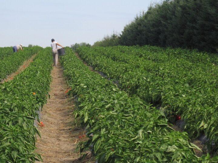 bonus dipendenti coop agricole