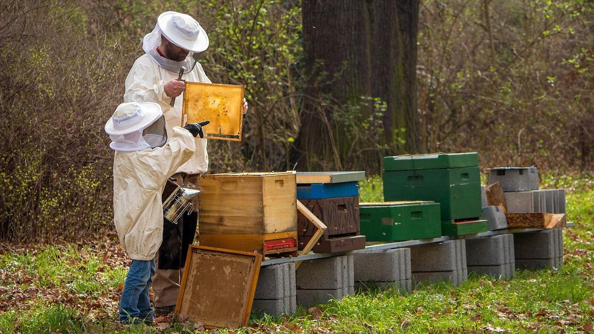 Sos dagli apicoltori siciliani: le api uccise da caldo, incendi e pesticidi