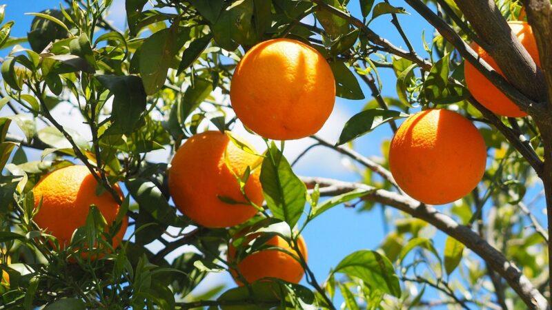 catasto frutticolo