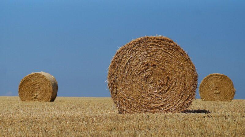 rete rurale siciliana