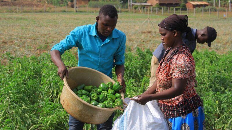lavoratori agricoli extracomunitari