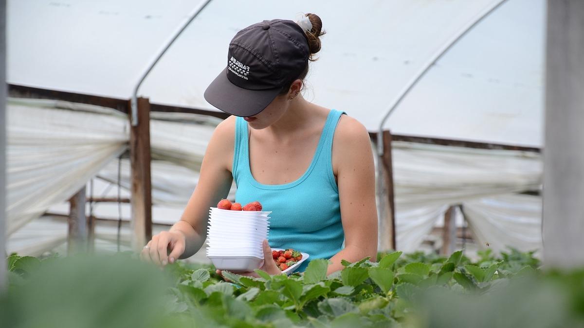 Bonus per gli stagionali agricoli in arrivo nel Decreto Sostegni bis