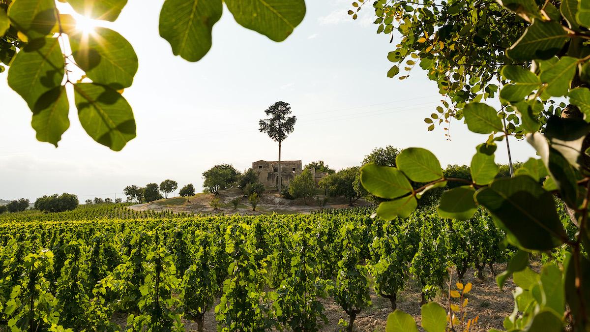 Strada del vino del Val di Noto, nuova brand identity e nuovi obiettivi