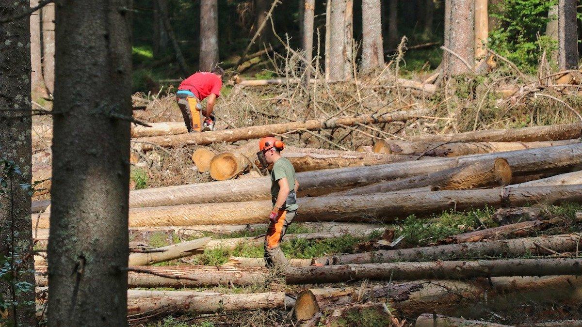 Riforma forestale, infuriano le polemiche sul ddl del governo regionale